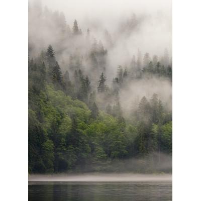 Лес в тумане, S1172, размер 194х270 см
